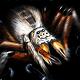 蜘蛛大戰(Arachnid Wars)