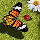 蝴蝶馴育螵蟲寶寶(Bug Off)