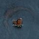 史前巨鱷 2(Lake Placid 2)