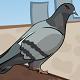 鴿子的復仇(Pigeons Revenge)